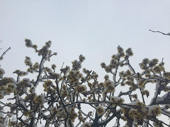 winter_fotos_15_7_04